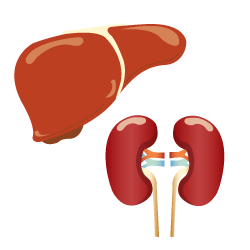 Liver and Kidneys